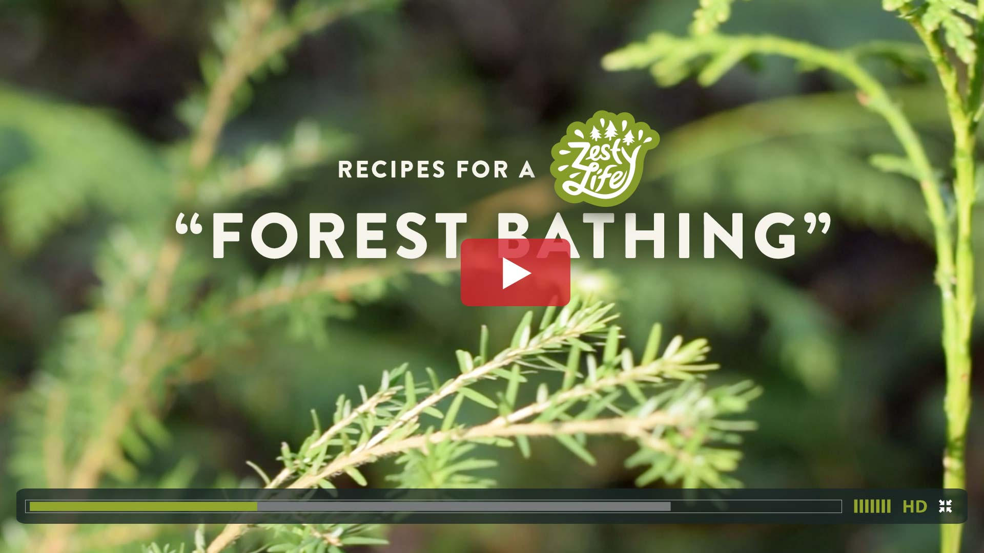 Recipes-for-a-Zesty-Life-Forest-Bathing-how-to