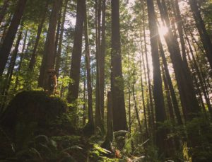 lessons-from-trees-depression-metaphor-squamish-slabs-zesty-life-rachelle